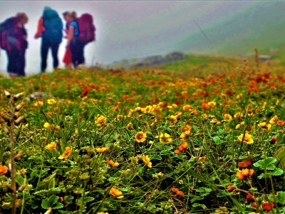 Valley-of-Flowers-samsaratrekking