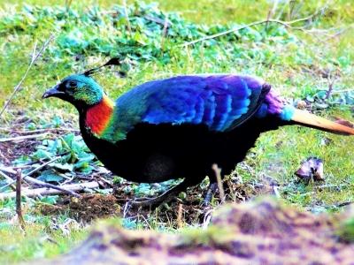 Nepal Birding