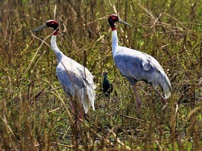 Birding in Lumbini