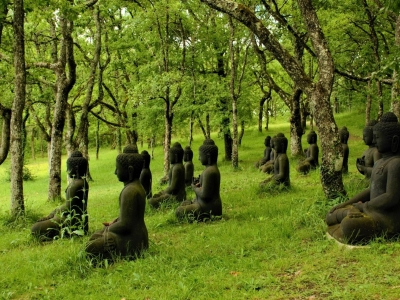 Buddha field