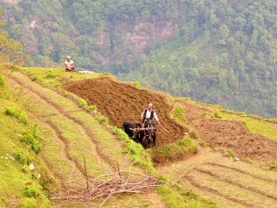 Farmer-Ploughing