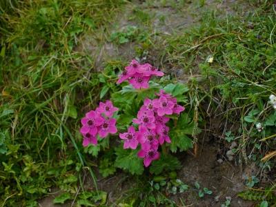 Khaptad-Flowers-Samsara-Trekking