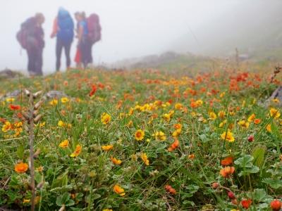 Khaptad-Summer-Flowers-Samsara-Trekking
